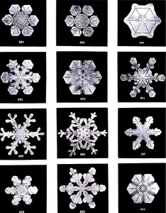 snow crystals, Wilson Alwyn Bentley (Fotographien, 1902)